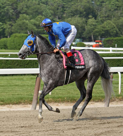 ELMONT, NY - MAY 29: Jockey John Velazquez and Paraiba return to the start after placing second in The Mount Vernon Stakes at Belmont Park on May 29, 2011 in Elmont, NY.