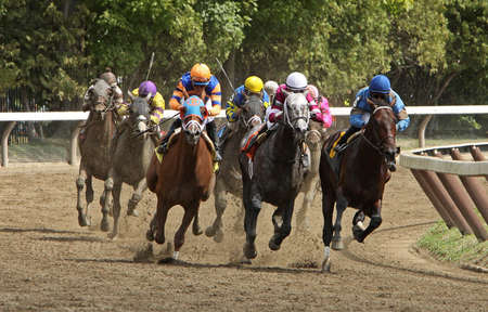 september 2: SARATOGA SPRINGS - SEPT 1: Jockey Jose Lezcano (blue cap) and Bellamy Brew lead the field at the top of the stretch en route to victory in the 1st race at Saratoga Race Course on September 2, 2012 in Saratoga Springs, NY. Editorial