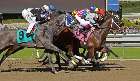 ARCADIA, CA - DEC 26: The field storms to the finish in the 1st race of the season at historic Santa Anita Park on Dec 26, 2012 in Arcadia, CA. Joel Rosario (red cap) and