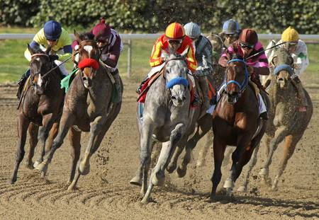 thoroughbred horse: ARCADIA, CA - FEB 16: Jockey Rafael Bejarano pilots
