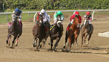 ARCADIA, CA - FEB 16: Jockey Drayden Van Dyke and Gal Has to Like It lead the field down the homestretch on the way to victory in the 2nd race at historic Santa Anita Park on Feb 16, 2014 in Arcadia, CA.