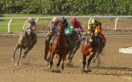 arcadia: ARCADIA, CA - FEB 16: The field for The San Vincente Stakes heads down the homestretch at historic Santa Anita Park. Eventual winner is Kobes Back (grey hrose on outside) with Joel Rosario up on Feb 16, 2014 in Arcadia, CA. Editorial