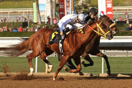 and arcadia: ARCADIA, CA - JAN 4: Hall of Fame jockey, Mike Smith (white cap) ,and Kill Shot outrun Iggy Puglisi and  Destino to win an allowance race at historic Santa Anita Park on January 4th in Arcadia, CA.