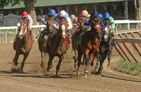 SARATOGA SPRINGS, NY - SEPT 5: The field surges around the turn and heads down the homestretch in a maiden race at Saratoga Race Course on September 5, 2015 in Saratoga Springs, NY. Eventual winner is Jockey Irad Ortiz, Jr. white cap and Rafting. Editorial