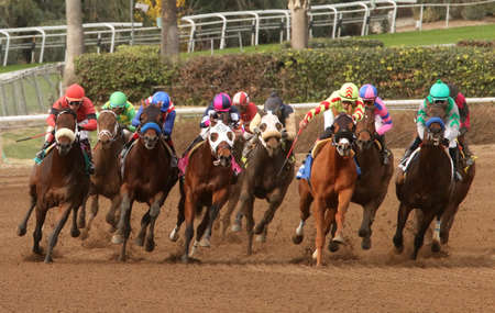 """ARCADIA, CA- January 9, 2016: A field of Thoroughbreds heads down the homestretch in an allowance race at Santa Anita Race Track in Arcadia, CA. Eventual winner is """"American Pride"""", piloted by jockey Martn Garcia (blue cap with white star)."""