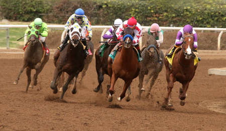 ARCADIA, CA- January 9, 2016: The field heads down the homestretch in The 17th Running of the Sham Stakes at Santa Anita Race Track in Arcadia, CA. Eventual winner is