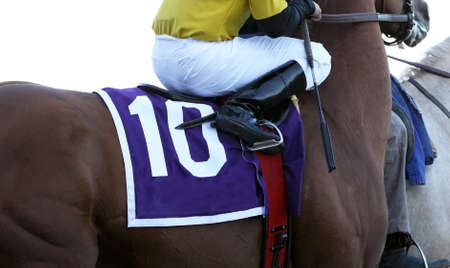 Close up view of jockey with whip on Thoroughbred racehorse.