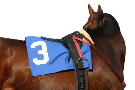wager: Close up view of Thoroughbred racehorse with saddle, stirrup, towel, and reins.