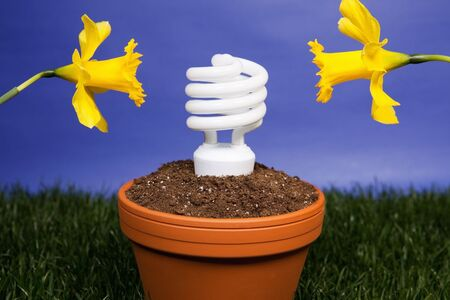 Compact fluorescent light bulb planted in a planter with daffodils Stock Photo