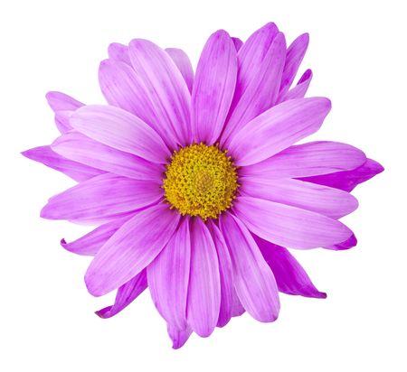 Lila Blüte Standard-Bild - 6666901