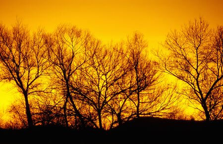 treeline at sunset, winter, Oregon, Willamette Valley, nature stock photography