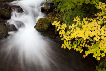 Long exposure of a waterfall and autumn colored leaves in the Columbia Gorge area of Oregon Stock Photo