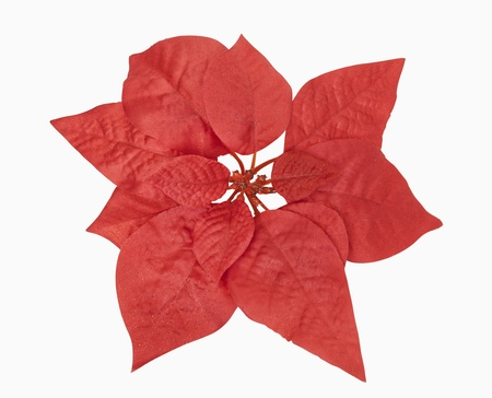 Red christmas plant