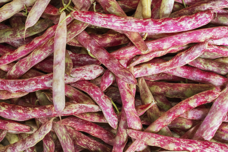 Cranberry Beans in farmers market, Seattle, Washington Stock Photo - 22998588