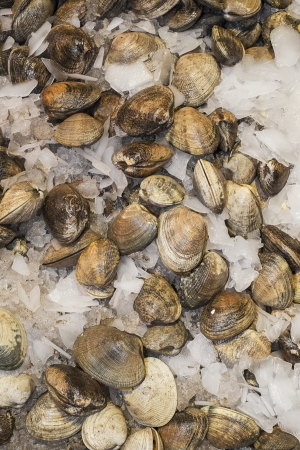 Clams for sale in farmers market, Seattle, Washington Stock Photo - 22998616