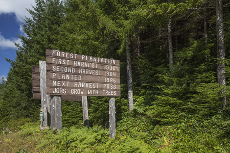 temperate: Tree farm sign showing harvest dates just outside Olympic National Park, Olympic Peninsula, Washington Stock Photo