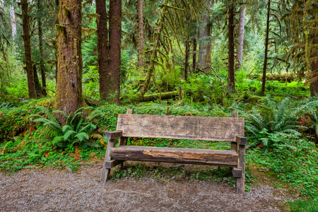 Empty log bench in the forest  in  Olympic National Park, Washington. Stock photo of a rustic log bench in the forest in the Hoh Rainforest.