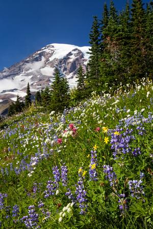 Mount Rainier National Park, Washington Foto de archivo