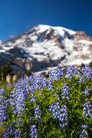 cascade range: Mount Rainier National Park, Washington Stock Photo