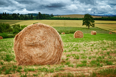 Large round hay bales in the field in Willamette Valley, Oregon Stock Photo