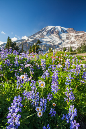 Mount Rainier National Park, Washington Stock Photo