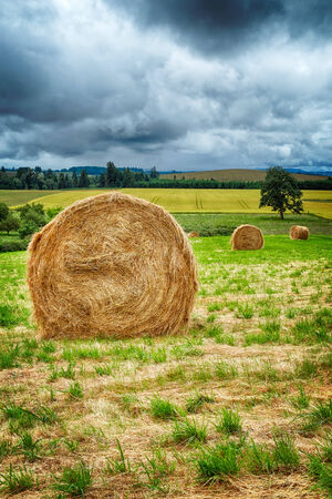 hayroll: Large round hay bales in the field in Willamette Valley, Oregon Stock Photo