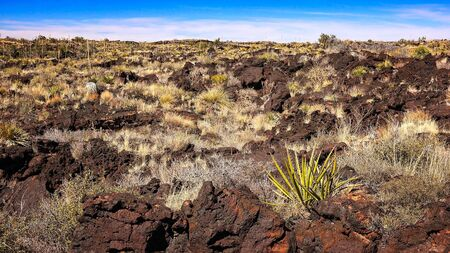 chihuahua desert: Volcanic landscape of lava at Valley of Fires Recreation Area in New Mexico