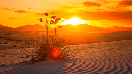 Ein schöner Sonnenuntergang von einer Yucca Pflanze auf den Sanddünen in White Sands National Monument in New Mexico Standard-Bild - 57069421