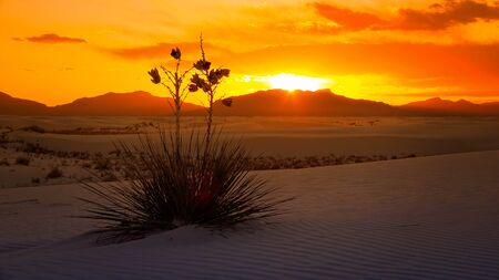Un bel tramonto di un impianto di Yucca sulle dune di sabbia a White Sands National Monument in New Mexico Archivio Fotografico - 57069527