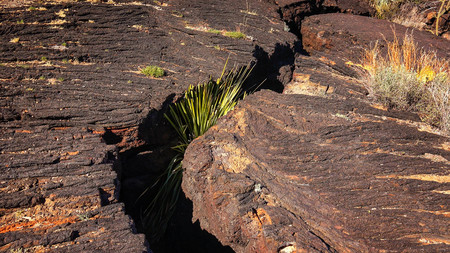fault: Plant grows in a fault crack in the lava field at Valley of Fires Recreation Area in New Mexico Stock Photo
