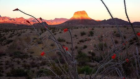 chihuahua desert: Desert landscape at sunset in Big Bend National Park in Texas Stock Photo