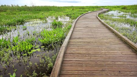 drive through: Boardwalk curves through  a marsh and wetlands along Pintail Wildlife Drive at Cameron Prairie National Wildlife Refuge in Louisiana