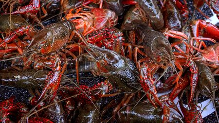 Fresh live crawfish for sale in New Orleans, extreme closeup Stock Photo - 86557853