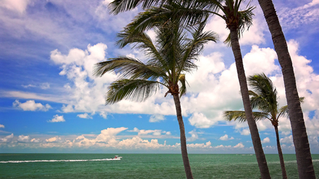 Turquoise ocean and swaying palm trees in the Florida Keys make for a tropical paradise