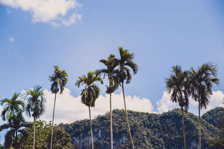 Outstanding palm tree with mountain behind in summer. Background asian natural concept. Stock Photo