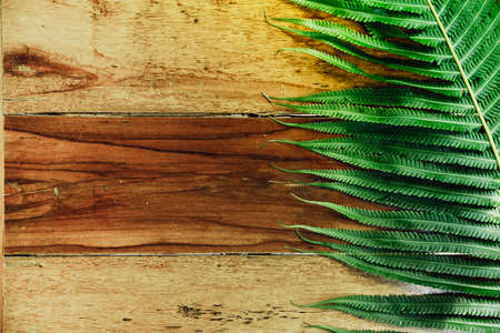 Wood background and green fern leaves with sunshine. Summer background with copy space.