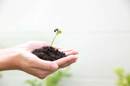 World environment day concept: Human hands holding seed tree with soil on blurred agriculture field background.