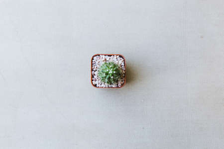 Top view of beautiful small cactus isolated with vintage canvas background. 스톡 콘텐츠