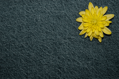 yellow gerbera flower on denim texture background. blank design in the style of hippie, boho, bohemia for cards, invitations, flyers. free space for text