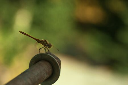 gray dragonfly sits on a beautifully blurred green background. macro photography. insects portrait. Odonata, Odonatology
