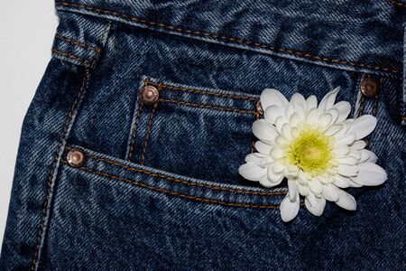 white gerbera flower in the pocket of rough jeans. Beautiful flower on denim texture background. jeans on a pure white background. blank design in the style of hippie, boho, bohemia for cards, invitations, flyers. free space for your text