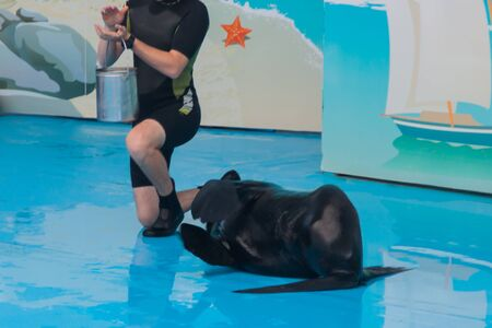 Trained dolphin in the aquarium, dolphinariums. show with dolphins. the trainer works with a trained dolphin in the pool