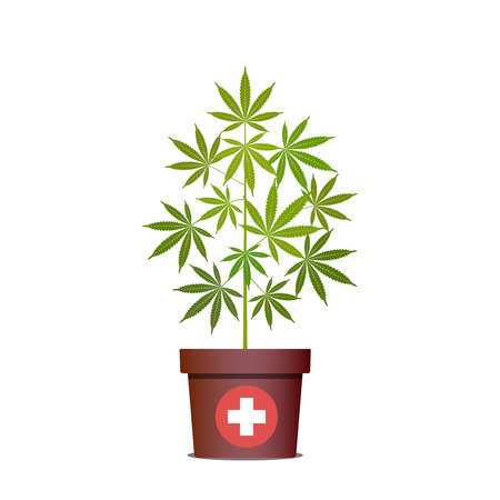 Medical marijuana or cannabis in pot. Green Herbs in a pot. Growing cannabis. Drug consumption, marijuana use. Isolated vector illustration on white background.
