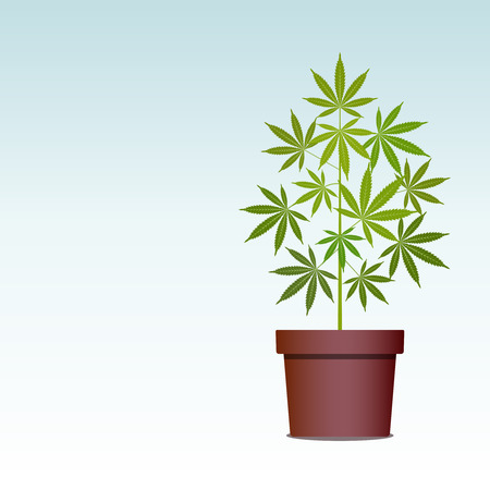 Marijuana or cannabis plant in pot. Green Herbs in a pot. Growing cannabis. Drug consumption, marijuana use. Isolated vector illustration with copy space. Illustration