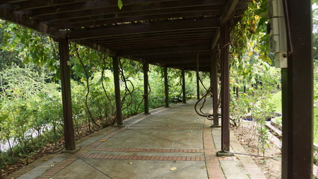 wooden canopy in the gardens of Kuala Lumpur
