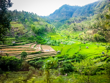 Rice Fields of South East Asia. Very much one of the main tourist attractions and points of interest in the area.