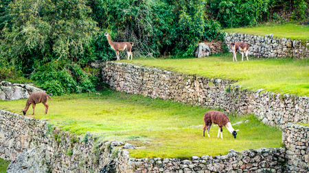 Inca Village in the mountains Peru South America. Very much one of the main tourist attractions and points of interest in the area. 写真素材