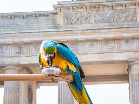 Berlin Brandenburg Gate with parrott Archivio Fotografico