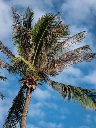 Pattaya, Thailand - August 1, 2019: Tropical palm tree leaves with bright blue and cloudy sky behind. Stockfoto - 128780832