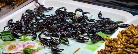 Pattaya, Thailand - August 1, 2019: Selection of Scorpians, insects and bugs being sold on the road side as quick street food snacks.